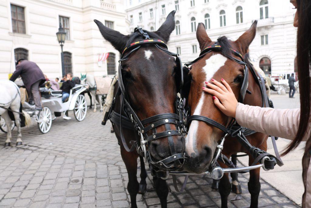 Viziteaza Viena