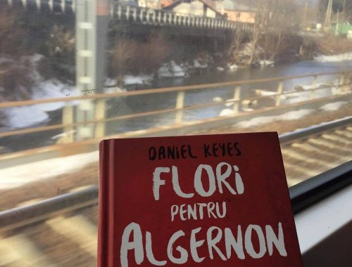 Flori pentry Algernon